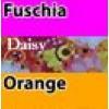 4 Fuchsia Body / Daisy Sleeves & Sides / Orange Trim